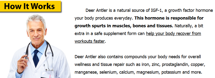 how deer antler works
