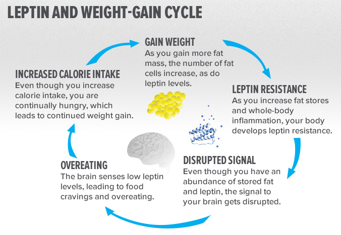 weight loss hormones